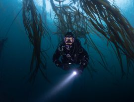 Kelp forests are amazing!